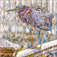 Heron with a Twist (Jeff Clow) Tags: art photoart photoconversion fineart greenheron stainedglass nature heron unique different southpadreisland texas