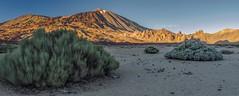 Ucanca (López Pablo) Tags: lascañadas tenerife canaryislands landscape panorama mountain volcano retama nature