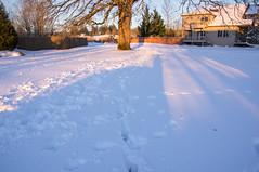 Portland Oregon Snow (Richtpt (Rich Uchytil)) Tags: 2017 oregon pdx portlandor snow winter portland unitedstates us