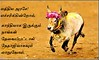jallikattu (MVRajan005) Tags: jallikattu madurai palamedu festival ruralsport local tradition culture tamil tamilnadu southindia bull bullfight animal sport muniyandi kaalai muniyandikaalai photoshop