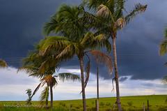 DSC_1699.jpg (Renato Caldeira) Tags: paulicéia coqueiro pordosol
