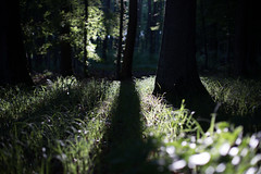 in the woods (paul.wienerroither) Tags: trees light plants green nature grass leaves forest canon dark photography 50mm austria spring woods greenisbeautiful shaddow