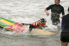 "Surf Dog Competition-CD-080115 (172) • <a style=""font-size:0.8em;"" href=""http://www.flickr.com/photos/25952605@N03/20270689075/"" target=""_blank"">View on Flickr</a>"