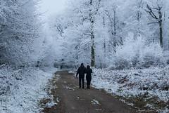 Les amoureux (agnèsleclerc) Tags: amoureux forêt hiver gèle givre