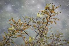 Spring Snow Shower © Elise Spata