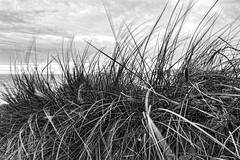 Blustery day at the beach (gopper) Tags: pwllheli gwynedd wales wind windy blustery dark dismal sea seaside llyn lleyn cymru nikon d5200 ngc welsh bw cloudy movement beach coast cymraeg flockr fflickr northwales peninsula snowdonia