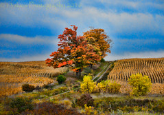 Colours on the Hill (HSS) (13skies) Tags: colour color tree fall skies clouds blue burst autumn season