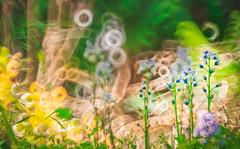 Confusion (Dhina A) Tags: sony a7rii ilce7rm2 a7r2 minolta rf rokkorx 250mm f56 mirror reflex minolta250mmf56 md prime rokkor bokeh confusion flower background green garden
