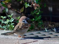 161211_GX7_1460058 (kuad9) Tags: bird