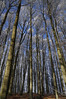 Winterwald (dominidomk) Tags: wald forest schnee winter kälte reif raureif landschaft winterzauber stamm