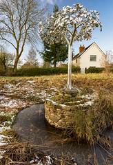 silver tree sculpture (dgmann11) Tags: tenburywells sculptures
