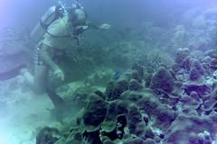 n0005.06 (avaragado) Tags: barbados coralreefclub fd197504 fd197604 fd197905 n0005 tonysmith