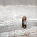 Horse Of Snowy River- Kodiak, AK (rishaisomphotography) Tags: kodiak alaska deepnorth horse landscape river cold white water frozen nature naturephotographer reflections