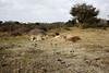 Cattle at Sandy Point (or chameleons?) (Carneddau) Tags: haylingislandloop sandypoint southcoastpath cattle havant england unitedkingdom