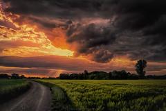 Wolken (radonracer) Tags: clouds landscape landwirtschaft wolken landschaft feldweg niederrhein getreide boeckelt