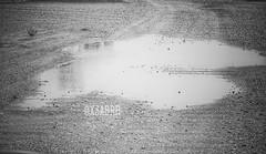 #Water #swamp #Earth #bw  # # # # # # # #hdr #colorful #photography #sonyalpha # # #sony  #photos #ksa #PicsArt # # # #saudiarabia #blackandwhite (photography AbdullahAlSaeed) Tags: blackandwhite bw water photography colorful photos earth sony swamp saudiarabia hdr  ksa      sonyalpha    picsart
