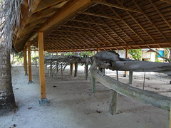 Whale skeleton in the Maldives