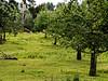 Urdenbacher Kämpe Juni 2015 / II - Obstwiese (KL57Foto) Tags: trees summer nature pen germany sommer meadows wiese olympus düsseldorf bäume rhineland rheinaue aue obst auenlandschaft 2015 floodplain urdenbach baumberger obstwiese urdenbacherkämpe kämpe urdenbacher epm2 kl57foto düsseldorfurdenbach