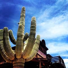 Arizona (Matt Burtis) Tags: arizona cactus sky plant skyline desert outdoor wildwest oldwest apachejunction