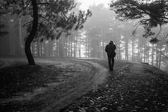 Crónica de enero (AvideCai) Tags: blancoynegro paisaje bn bosque niebla lomas tamron2470 avidecai