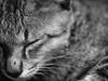 Sleepy head (Henry Sudarman) Tags: pet animal cat indonesia olympus e300 dslr bekasi zd5020
