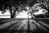 _MG_0960-2 (R.Räbel) Tags: pb schwarzundweiss blackandwhite licht light luz pretoebranco silhueta flare pessoa jogging tree árvores baum aoarlivre paralelepipedo bw trees monocromático