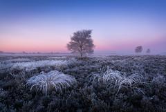 Frozen (Mario Visser) Tags: frozen morning sunrise trees white ice ginkelse heide netherlands landscape nature blue purple mariovisser d7100 sigma 1020 winter