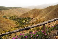 Tizi-n-testpas (atsjebosma) Tags: landschap bergen mountails flower bloemen fence hek atsjebosma morocco marokko tizintestpas steil