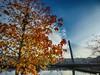 Convergentes (juantiagues) Tags: puente tirantes árbol otoño juantiagues juanmejuto