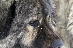 IMG_20161229_185324_897 (Carmen Claudia Cornea) Tags: dog caine