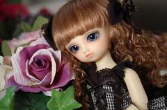 SD幼天使キラ (折敷) Tags: doll bjd sd yosd kira