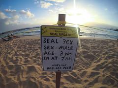YDXJ0203 (Aschae) Tags: poipubeach poipu sign monkseal hawaii kauai