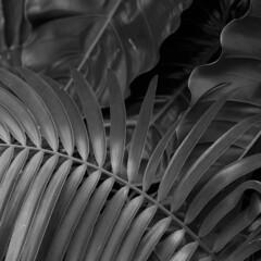 Florida foliage (Tim Ravenscroft) Tags: foliage leaves monochrome blackandwhite selby gardens botanical sarasota florida usa