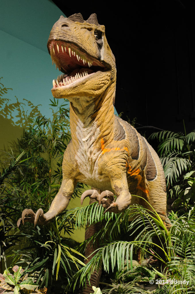 The world 39 s most recently posted photos of allosaurus and Dinosaur museum ohio