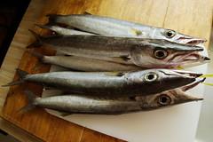 Barracuda for dinner (ngari.norway) Tags: seychelles travel ngari photography photos indianocean barracuda