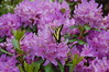 DSC_0193 (Lindy Dolldreams) Tags: butterfly rhodies