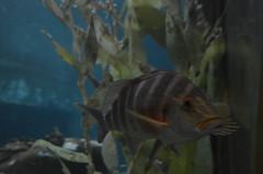 Je suis un poisson
