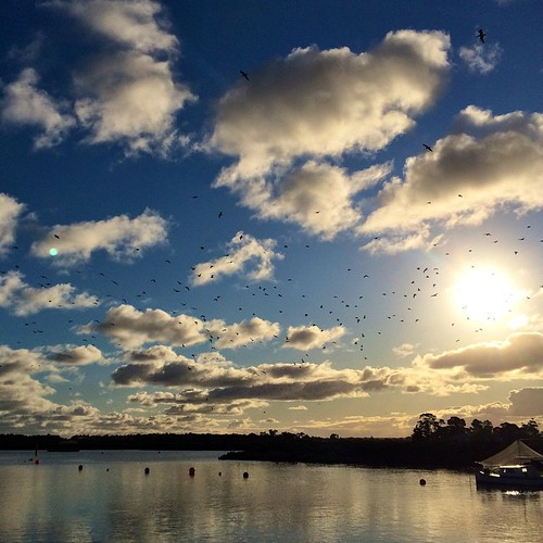 158/365 • sunburst and seagulls and sky • #158_2015 #afternoon #outandabout #seagulls #sky #sunshine #Winter2015 #tooradin #inlet #walking #clouds
