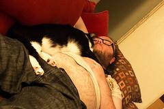 IMG_2231 (Jenn ) Tags: cat felix daniel rescuecat formerstray fiv fivcat fivpositive fivawareness