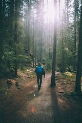 Johnston Canyon Trail (Kesler Bear) Tags: park canada mountains hiking canyon trail national banff johnston
