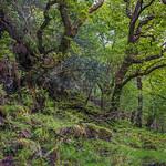 Glendalough Walk 4 thumbnail