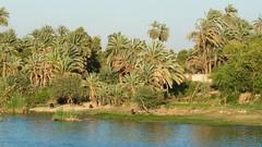 eine Reise durch Ägypten (Ina Hain) Tags: green nature water river landscape tiere wasser natur pflanzen nile afrika grün nil ufer fluss landschaft ägypten leben nilkreuzfahrt