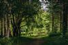 Lorien (st.Clemente) Tags: wood morning sunlight green film forest three russia path siberia agfavista100 elven lorien