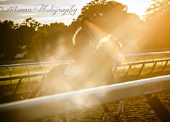 (EASY GOER) Tags: summer vacation horses horse ny newyork sports beauty race canon athletics track saratoga competition upstate running racing course event 5d ponies athletes tradition races sporting spa thoroughbred equine exciting thoroughbreds markiii