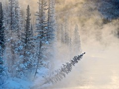 Rocky Mountain Morning (ebergcanada) Tags: nature canada canadianrockies bowriver winter sunrise tree forest fog