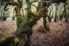 Myakka Morning (MichaelSOwens) Tags: hdr myakka river state park sarasota florida oak tree air plant fern wetland