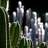 Habitation Latouche, Le Carbet, Martinique (pom.angers) Tags: lecarbet martinique 972 antilles francedoutremer dromcom france europeanunion cactus february 100