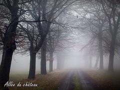2017-01-08 allée du château f (23) (april-mo) Tags: fog brouillard mist misty foggy wood treesinfog winter bois secretwood alléeduchâteau trees arbres nature