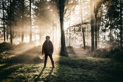 Natural wonder (markfly1) Tags: alfie son boy child walk woods crepascular rays sunlight light mist shadow paths sun amazing sight