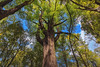 Tane Mahuta (guytakesaphoto) Tags: newzealandscenery newzealand landscape photography ragphotography outdoorphotography nature scenic thegoodviews mothernature green naturephotography adventure nztourism travel outdoors outandabout tree tanemahuta
